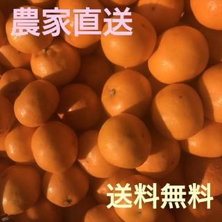 愛媛県産はるみ5㎏訳ありお買い得(フルーツ)
