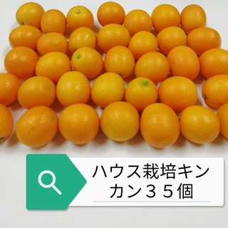 ハウス栽培キンカン35個(フルーツ)
