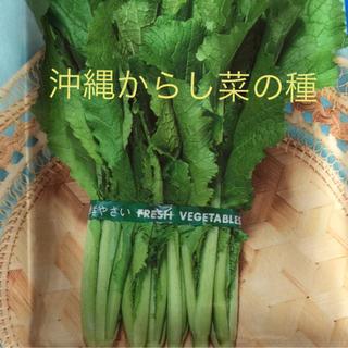 沖縄からし菜の種(野菜)