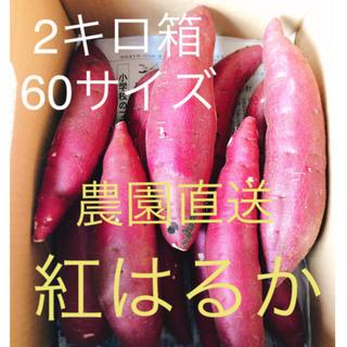 千葉県産☆完熟☆紅はるか さつまいも 農園直送 新鮮 2キロ箱 60サイズ(野菜)
