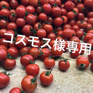 コスモス様専用 ミニトマト2kg(野菜)
