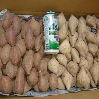 種子島ゴールド & 安納芋 SSサイズ 10キロ(野菜)