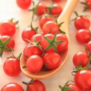 マイクロトマト 種 赤 黄 30粒(その他)