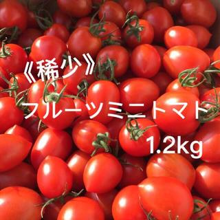 《稀少》 フルーツミニトマト 1.2kg ミニトマト トマト(野菜)