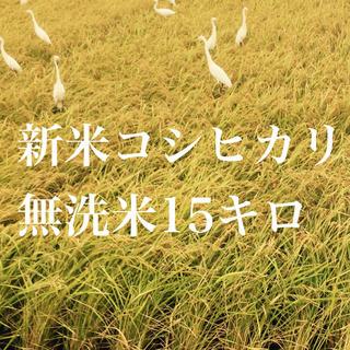 コシヒカリ無洗米15キロ(米/穀物)