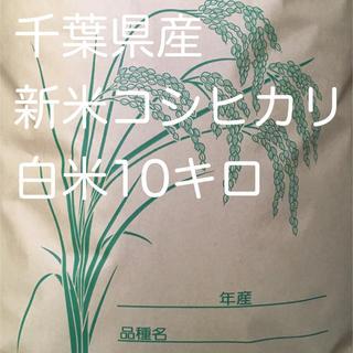 コシヒカリ白米10キロ(米/穀物)