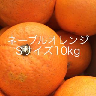 ネーブルオレンジSサイズ10kg