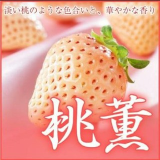 いちご苗桃薫2株(野菜)