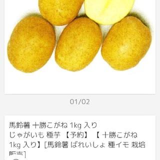 種芋じゃがいも 十勝こがね一キロ入り☆(野菜)