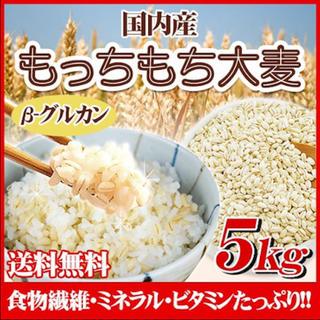もちもち大麦 もち麦 5キロ(米/穀物)