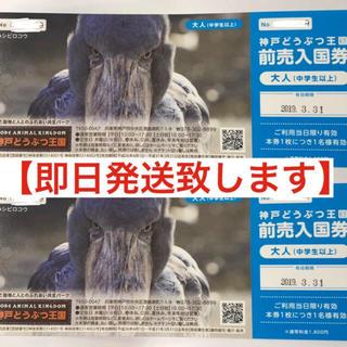 神戸どうぶつ王国  ペア入園券(動物園)
