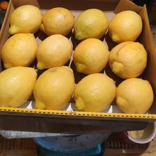 無農薬レモン1kg