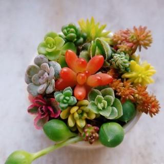 15種類♡多肉植物