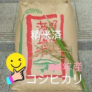 SKY様専用です☺コシヒカリ精米済(米/穀物)