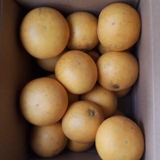 国産無農薬 グレープフルーツ 5kg 送料無料 訳あり(フルーツ)