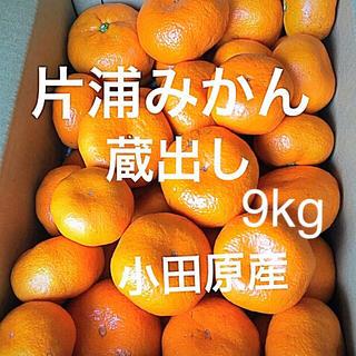 片浦みかん 蔵出し 小田原産 9㎏ 産地直送   送料込み(フルーツ)