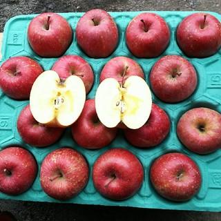 青森産  サンふじ リンゴ 家庭用 12個~18個  農家直送送料無料