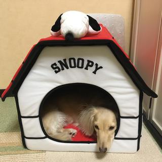 スヌーピーハウス(犬)