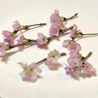 kira kira777様専用 桜ドライフラワー12(ドライフラワー)