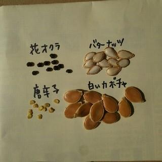 花オクラ、バターナッツ、唐辛子(カイエン)、白カボチャの種(野菜)