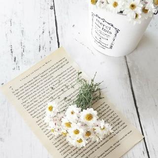 花かんざしのドライフラワー 茎付き20輪(ドライフラワー)
