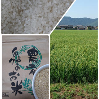 コシヒカリ10キロ(米/穀物)
