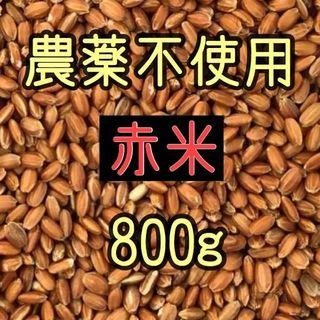 ★赤米(古代米) 愛媛県産 800g(米/穀物)