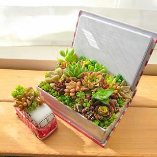◆多肉寄せ植え 多肉植物 BOOK缶&ヴィンテージミニバス 2つセット◎(その他)