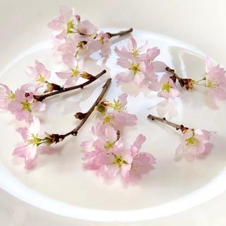 桜 ドライフラワー 23(ドライフラワー)