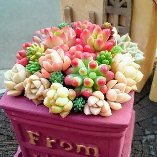 多肉植物の寄せ植え★エンジのスクエア鉢.。o○このまま飾れます(*^^*)(その他)