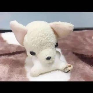 チワワ 犬 いぬ わんちゃん ホワイト 白 ぬいぐるみ(ぬいぐるみ)
