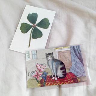 アッシュペーフランス(H.P.FRANCE)のJohn Derian ジョンデリアン ポストカード 2枚セット⑤ clover(切手/官製はがき)