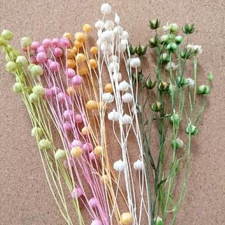 リンフラワー6色花材(ドライフラワー)