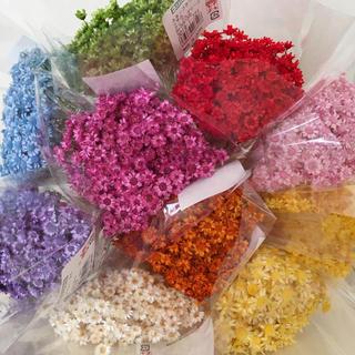 花材 スターフラワー ブロッサム10色(ドライフラワー)