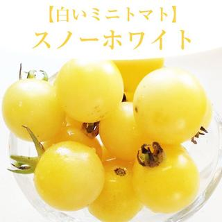 【激レア 白いミニトマト】スノーホワイトの種10粒(野菜)