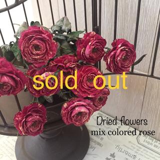 sold out♡ドライフラワー♡可愛いラナンキュラ咲のバラ(ドライフラワー)