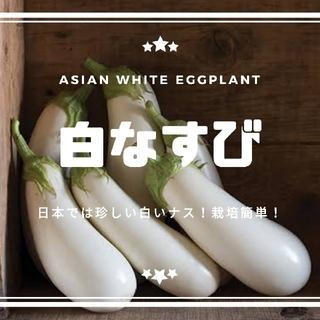 ナス【白いナス】アジアホワイト 種子20粒(その他)