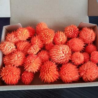 ドライフラワー 千日紅 センニチコウ オレンジ 25個以上(ドライフラワー)