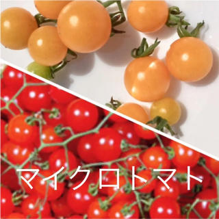 マイクロトマト  種 (黄色.赤色)(野菜)