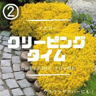 【クリーピングタイム②】イエロー種子20粒 グラウンドカバー、花壇の縁取に!(その他)