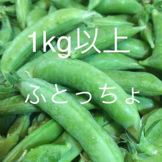 ふとっちょスナップえんどう豆 1kg以上(野菜)