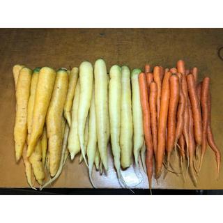 彩りフルーツにんじん。規格外訳あり3色、5kg。無農薬野菜。(野菜)