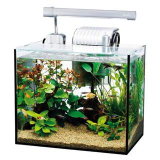 テトラ(Tetra)の初心者も簡単! 熱帯魚 水槽 アクアリウム 飼育 観賞魚 魚 300 60 90(アクアリウム)
