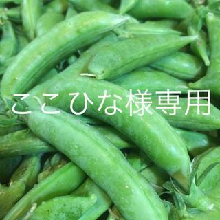 ☆ここひな様専用☆ ふとっちょスナップえんどう(野菜)