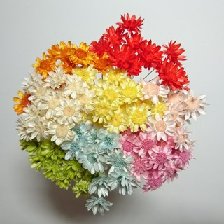 スターフラワーブロッサム80本花材(ドライフラワー)