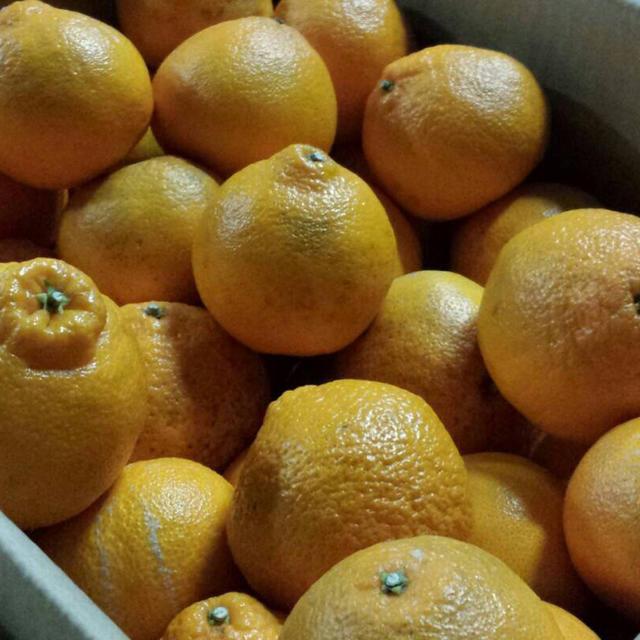 【マリリン様専用】不知火デコ約20kg 食品/飲料/酒の食品(フルーツ)の商品写真