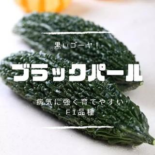 黒ゴーヤ【ブラックパール】種子3粒 ニガウリ(その他)