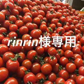 rinrin様専用 ミニトマト2kg(野菜)