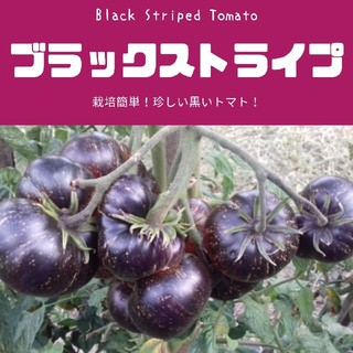 トマト【ブラックストライプ】Black Striped 種子20粒(その他)