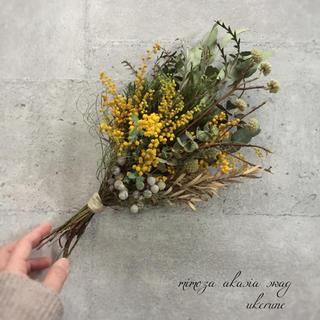 ミツマタの蕾と瀬戸内のミモザ 春の若草色スワッグ  ドライフラワー(ドライフラワー)